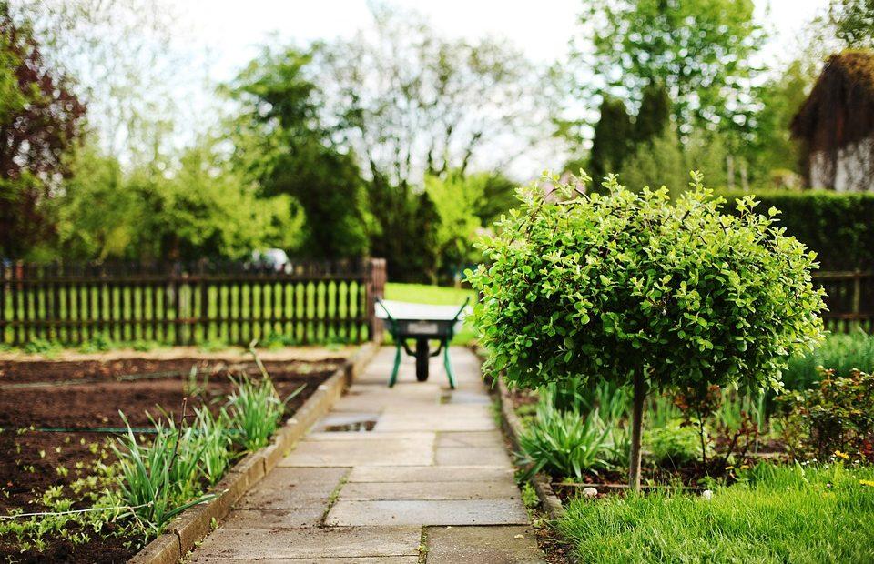 Le piléa : star des jardins